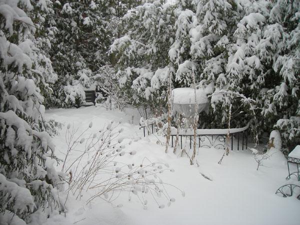 Branches burdened by wet snow. Spent flower heads of Wild bergamot nod off.
