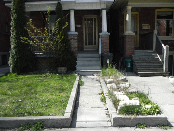 14 Salem Ave. was a sorry sight/site in April 2012: large blocks of limestone were dumped, covering most of the bed; horsetail disappeared except for a few sprigs and creeping bellflower was taking over what available space was left.