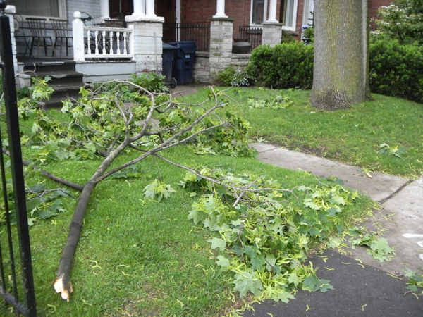 A dropped limb from Norway maple is more natural looking than a human arm reaching up from the earth.
