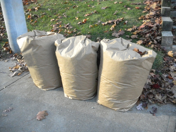 Three bags full. What? You can't find room in your garden for three measly bags of fallen leaves?! Bags for pickup to city composting facilities would be better spent on site nourishing your garden.