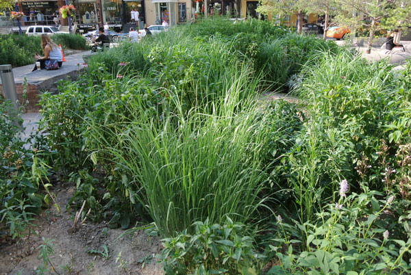In October 2012 American Society of Landscape Architects (ASLA) bestowed its Landmark Award on The Village of Yorkville Park with its 11 sections, including the wildflower garden.