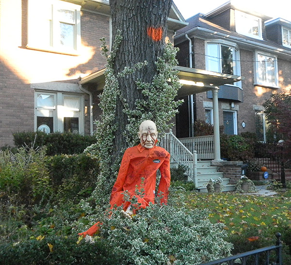 """Trilogy of Terror: (1) """"Jake""""; (2) the tree from the previous picture - Norway Maple as an invasive species along with a smothering euonymus and (3) the imminent loss of a tree and its canopy cover (denoted by the orange spot). Triply terrifying!"""