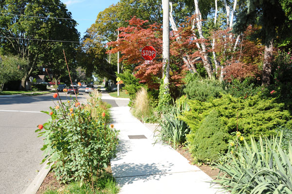 Vegetation living on the boulevard. A better choice would have been native species. Above all, avoid planting goutweed, periwinkle, English ivy, Japanese barberry, etc. These seem to be the choice of gardeners who are avoiding turf but end up planting invasive species.