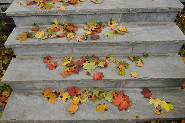Norway maple leaves may feign the fall colours of sugar maple. However, they are afflicted with the dreaded fungus - Tar Spot! It's like the Black Death darkening your doorstep!