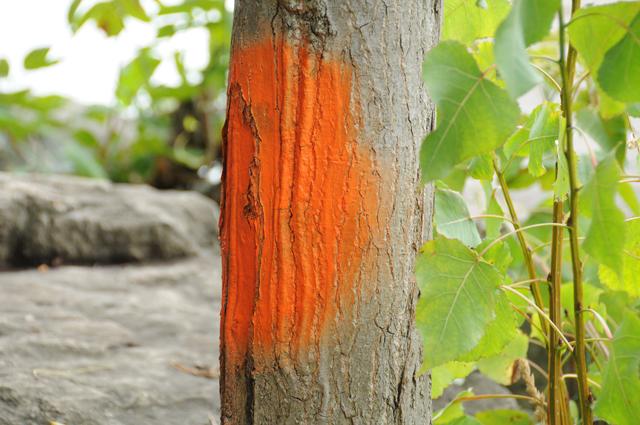 Orange paint on tree.