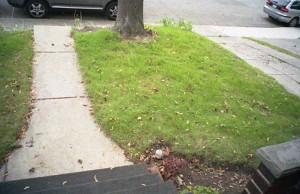 Original lawn intact. Pre-driveway widening.