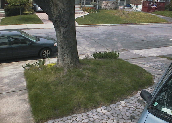Starting with a clean slate: patch of lawn. This grinned the gardener, was the first thing to go! (May 2005)