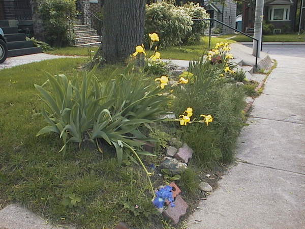 Before: All manner of debris, including roadkill had been incorporated into stabilizing the slope of the front garden. (June 2004)