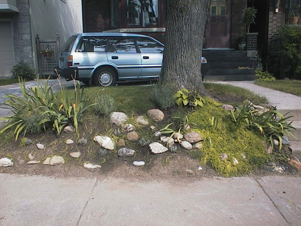 After: Most of the extraneous hardscape, weeds, including grasses were removed. Irises and Asian lilies remained for the moment.