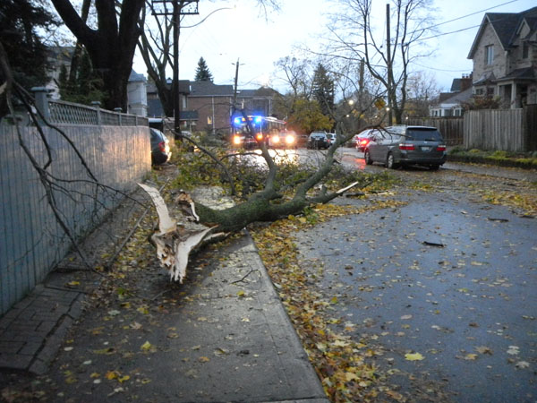 """Norway maple branch down. The """"crime scene"""" just over two years earlier Oct. 2012)"""