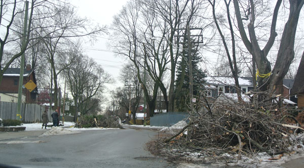 Typical streetscape weeks after the ice storm.
