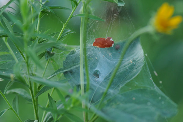 Spider habitat – the parlour is open for business.