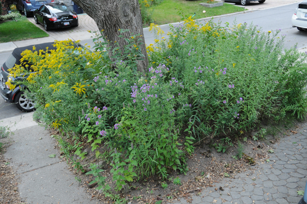 The Native Plant Source (note: most of the white asters had not begun to bloom).