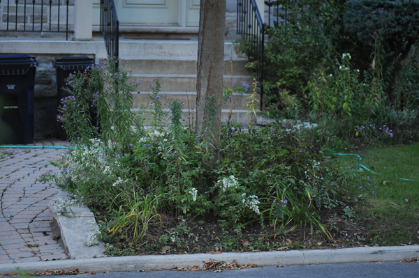 Infiltration station: a great place to start a native plant family.