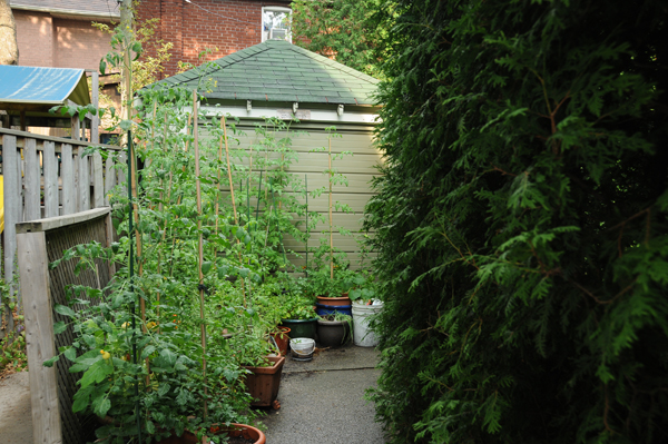 The usual set up: the vegetable garden on the driveway.